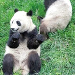 Wolong National Natural Reserve (Sichuan Giant Panda Sanctuaries)